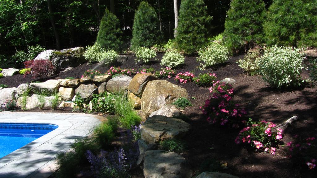 Vernon plants